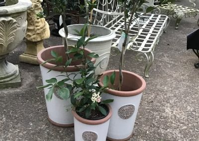 Set of 3 White Garden Pots   Sm $45  Med $75  Lge $95
